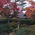 Photos: 11月9日 昭和記念公園 日本庭園紅葉。。?