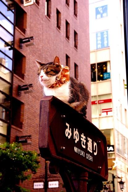 銀座みゆき通り風景・・まったく動かず寝るネコ 笑 20140629