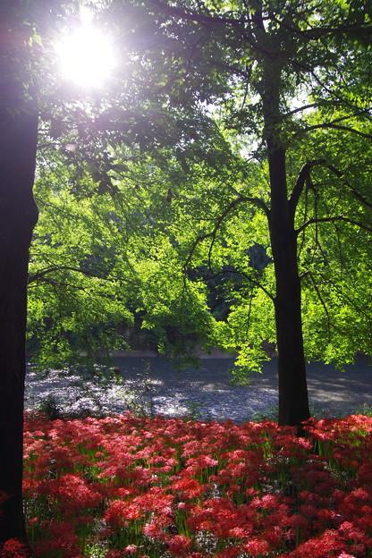 撮って出し。。朝日がのぼり木漏れ日が照らす 9月18日