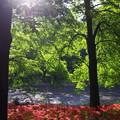 写真: 撮って出し。。朝日がのぼり木漏れ日が照らす 9月18日