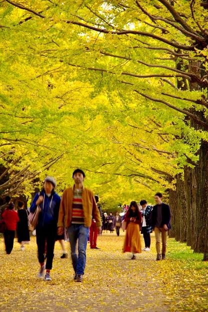 撮って出し。。緑も残すイチョウ。。ちょっと散歩したくなる(^^)11月4日