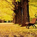 淋しげな。。ベンチ 昭和記念公園 20171104