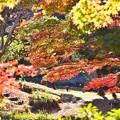 三保ダム周辺の色づいた紅葉。。20171112