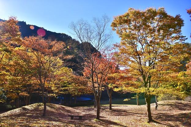 丹沢湖の紅葉。。20171112