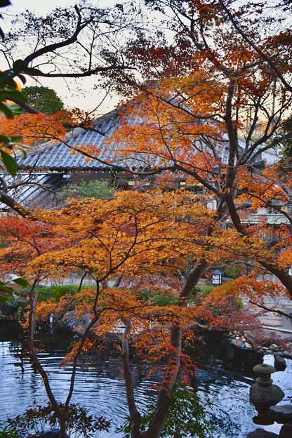 長谷寺の紅葉も終わりへ。。。20171209