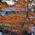 写真: 長谷寺の紅葉も終わりへ。。。20171209