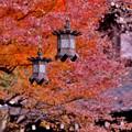 写真: 長谷寺灯籠と終わりの紅葉。。20171209