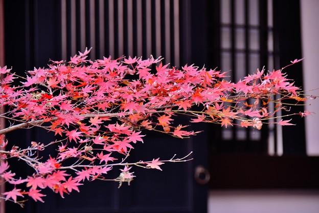 長谷寺の紅葉。。枯葉へ 20171209