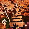 陽も落ちた鎌倉長谷寺。。ライトアップと紅葉 20171209