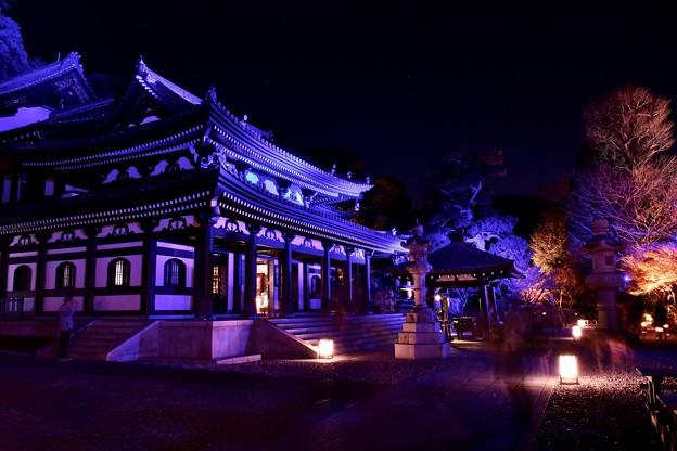 綺麗な彩る青紫のライトアップ 鎌倉長谷寺境内 20171209