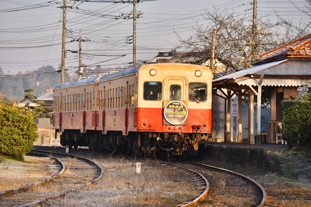朝日を浴びて暖かくなる小湊鉄道キハ200 上総鶴舞駅 20171210