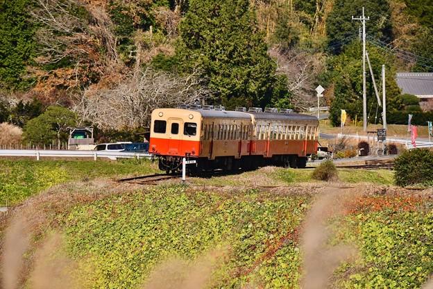 小湊鉄道。。キハ200系カーブを抜けて走る 20171210