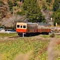 写真: 小湊鉄道。。キハ200系カーブを抜けて走る 20171210