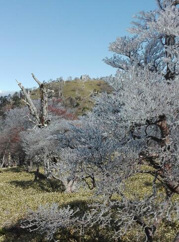 大台の樹氷