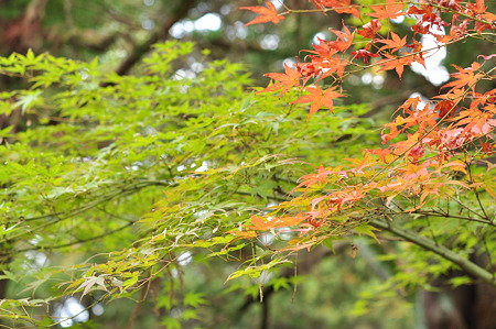 奈良公園2011秋-06