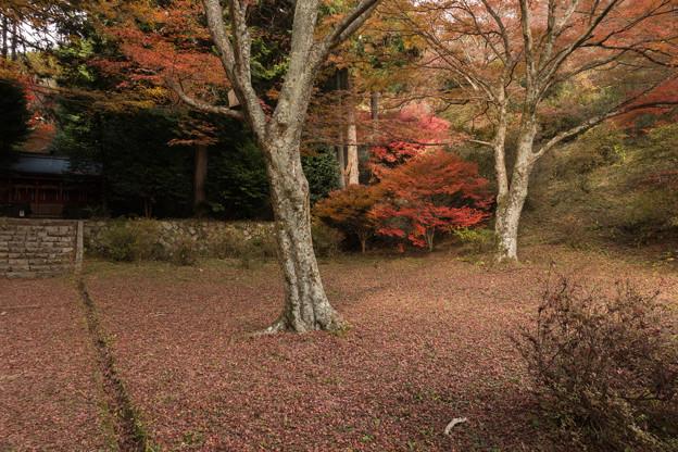 Photos: 2014紅葉の鳥見山公園・2