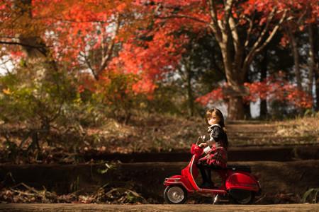 2014紅葉の鳥見山公園・5
