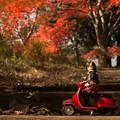 Photos: 2014紅葉の鳥見山公園・5