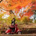 Photos: 2014紅葉の鳥見山公園・6