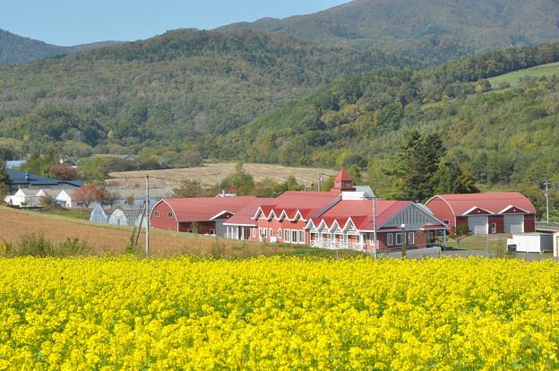 写真: キガラシ畑