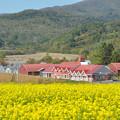 Photos: キガラシ畑