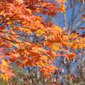 写真: 富里ダムの紅葉