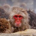 写真: 長野猴子泡湯02