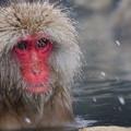 写真: 長野猴子泡湯06