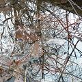 Photos: 水鏡