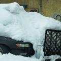 写真: 雪に埋もれて