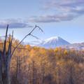 晩秋の羊蹄山