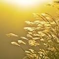 写真: 仙石原のススキを見に行こう・・・(*´з`)