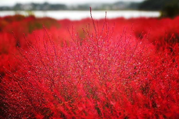 白露に 風の吹きしく 秋の野は つらぬきとめぬ 玉ぞ散りける