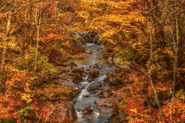 写真: 流れもあへぬ 紅葉なりけり・・・