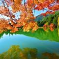 写真: 鏡面の秋景 ~南伊奈ヶ湖~
