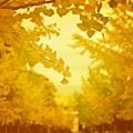 Yellow Magic Street