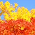 写真: 秋の三色