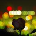 写真: 工場長へ贈る薔薇。