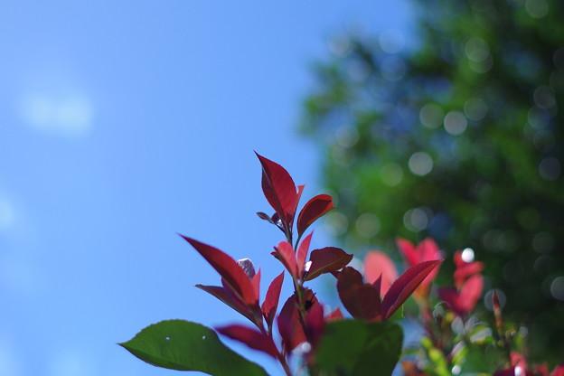 「女心と秋の空」