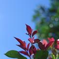 写真: 「女心と秋の空」
