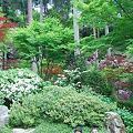写真: 緑がきれい