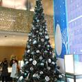 2014*銀座・ティファニーのクリスマスツリー