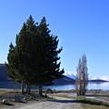 写真: ニュージーランド*テカポ湖7