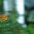 Photos: 『咲…。』