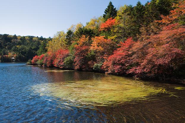 白駒池の秋 その2