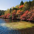 写真: 白駒池の秋 その2