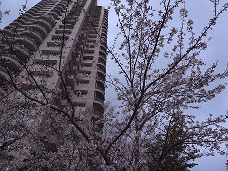 南千住の桜 2010-4-3 22