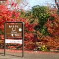 阪急嵐山駅の紅葉