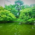 緑に囲まれた庭園