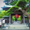 写真: 鎌倉 長谷寺